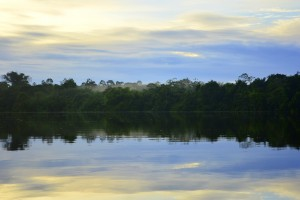 Ochtend Suriname Jungle