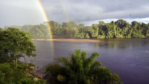 gunsi regenboog suriname jungle