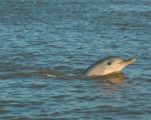 Dolfijnen spotten - Waterproof Tours Suriname