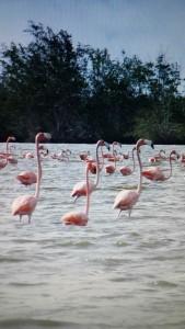 Bigi pan flamingo