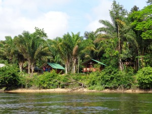 Pingpe jungle lodge