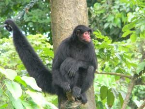 Suriname - Paramaribo zoo