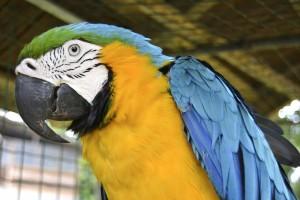 Suriname wildlife