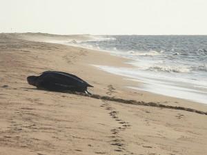 Zeeschildpaddentrip - Waterproof Tours Suriname - Matapica