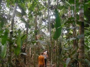 isadou jungletour