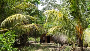 Jungle lodge Suriname