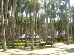 Palmentuin - Paramaribo - Suriname