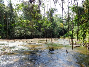 Jungle Suriname